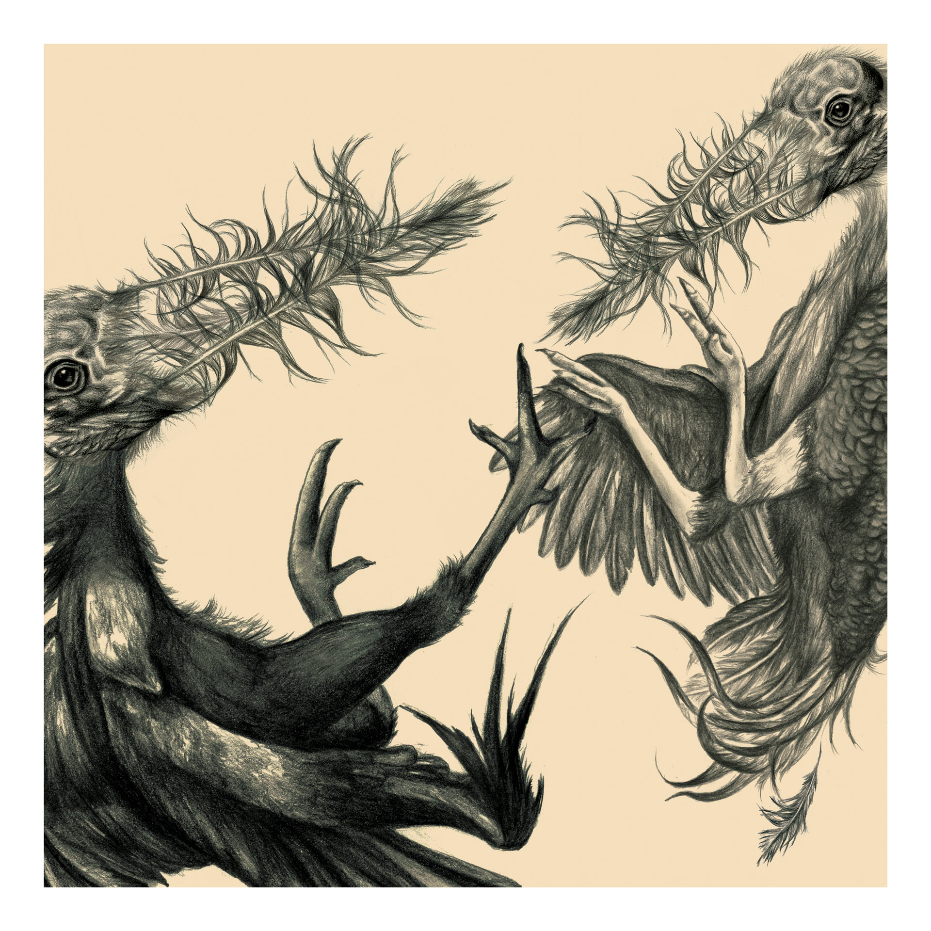 Julia Szulc Illustration. Illustration for Feathered Arms album cover. Bird Fight.